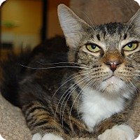 Adopt A Pet :: Frances - Whittier, CA