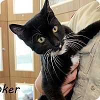 Adopt A Pet :: Joker - Edgewood, NM
