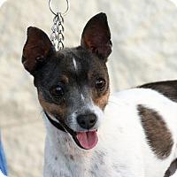 Adopt A Pet :: Prada - Palmdale, CA