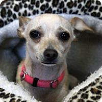 Adopt A Pet :: Chloe - Jamestown, CA