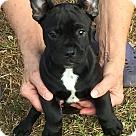 Adopt A Pet :: Black Bart