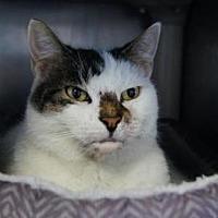 Adopt A Pet :: Vina - New Milford, CT