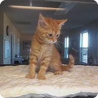 Adopt A Pet :: Snuggles - Columbia, KY