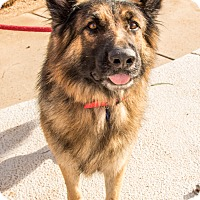Adopt A Pet :: Raiden - Phoenix, AZ