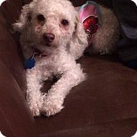 Adopt A Pet :: Teddy - Aiken, SC