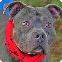 Adopt A Pet :: ELVIS - Louisville, KY