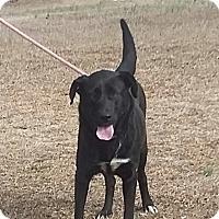 Adopt A Pet :: Elly May - Carthage, NC
