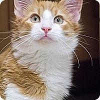 Adopt A Pet :: Gruyere - Chicago, IL