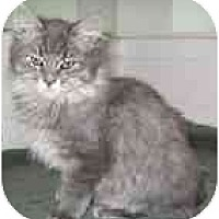 Adopt A Pet :: Zeke - Davis, CA