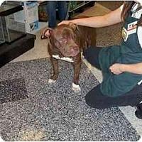 Adopt A Pet :: Auggie - Lodi, CA