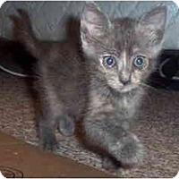 Adopt A Pet :: Lyla - Davis, CA