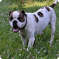 Adopt A Pet :: Bubba - Bakersville, NC