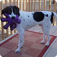 Adopt A Pet :: Zeb - Cedar Rapids, IA