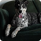 Adopt A Pet :: Maggie May