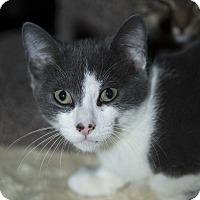 Adopt A Pet :: Shane - Berkeley Hts, NJ