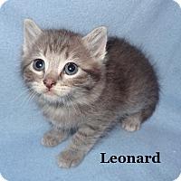 Adopt A Pet :: Leonard - Bentonville, AR