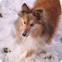 Adopt A Pet :: Liam - Circle Pines, MN