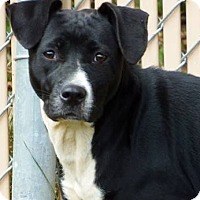 Adopt A Pet :: Bae - Lincolnton, NC