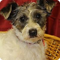 Adopt A Pet :: Travis - Waldorf, MD