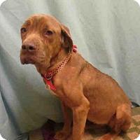 Adopt A Pet :: *CORETTA - Upper Marlboro, MD