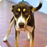 Adopt A Pet :: Coco - Miami, FL
