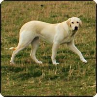 Adopt A Pet :: Lisa LGD - Kyle, TX