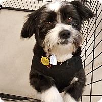 Adopt A Pet :: Olaf - Barnesville, GA