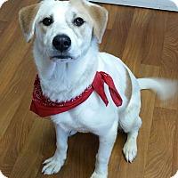Adopt A Pet :: Spike - Lisbon, OH