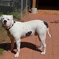 Adopt A Pet :: FLASH - Hampton, GA