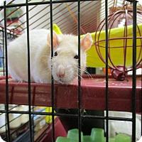 Adopt A Pet :: OLIVIA - Philadelphia, PA