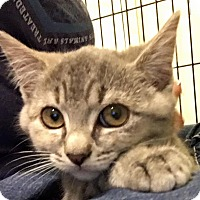 Adopt A Pet :: Sterling - Mount Laurel, NJ