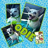 Adopt A Pet :: Odie2 - Scottsdale, AZ