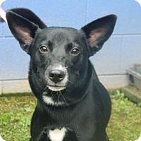 Adopt A Pet :: Elsa - Randleman, NC