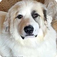 Adopt A Pet :: Pepper in LA - new! - Beacon, NY