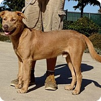 Adopt A Pet :: Blue - Lathrop, CA