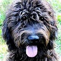 Adopt A Pet :: CECE(OUR
