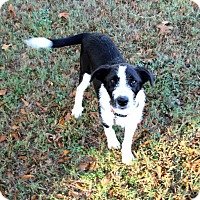 Adopt A Pet :: Keir - Muldrow, OK