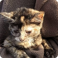 Adopt A Pet :: Elisabeth - Fairborn, OH