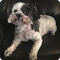 Adopt A Pet :: Sadie - O'Fallon, MO