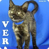 Adopt A Pet :: Vera - Carencro, LA