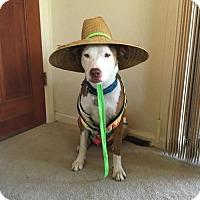 Adopt A Pet :: Lena - tucson, AZ