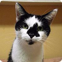 Adopt A Pet :: Moo moo - Port Clinton, OH