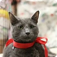 Adopt A Pet :: Ferby D RB - NYC, NY
