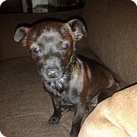Adopt A Pet :: Bruce - DeForest, WI