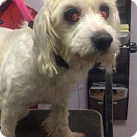 Adopt A Pet :: Skittles - Oak Ridge, NJ
