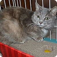 Domestic Mediumhair Cat for adoption in Stafford, Virginia - Mattie