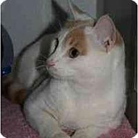 Adopt A Pet :: Buddha - Marietta, GA
