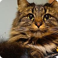 Adopt A Pet :: Kristie - N. Berwick, ME