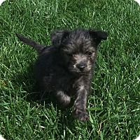 Adopt A Pet :: Rafa - La Habra Heights, CA