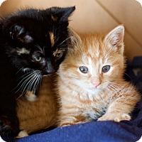Adopt A Pet :: Dante - Island Park, NY